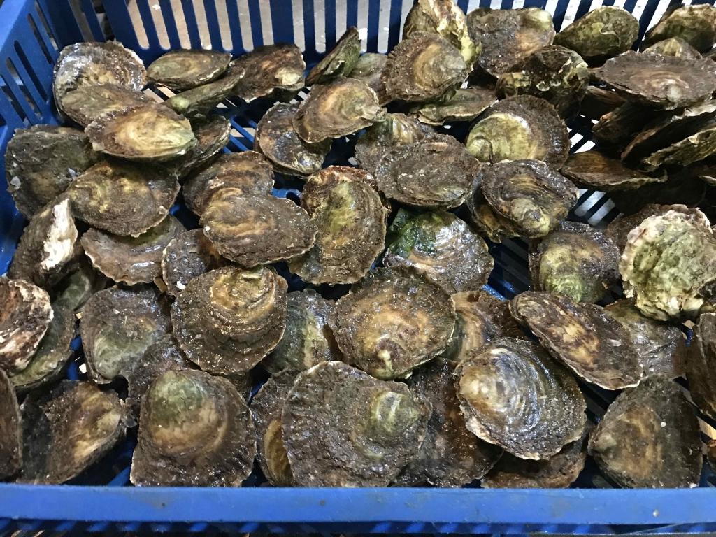 Foto impressie bezoek oesterput Oostende_2